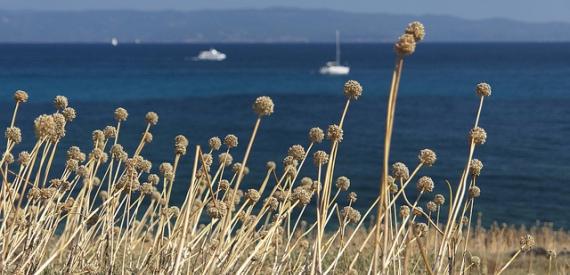 Korsika der Strand von Marinelle