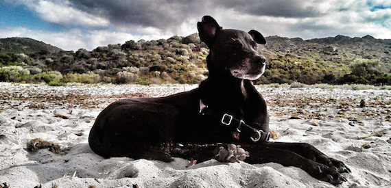 dog friendly holidays in Corsica