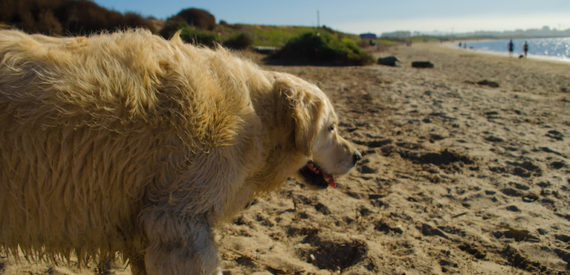 Corsica beaches for dogs