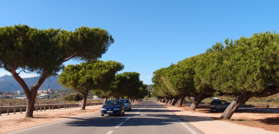 Corsica with or without a car