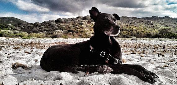 vacanza in Corsica con il cane